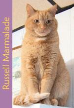 RussellMarmalade